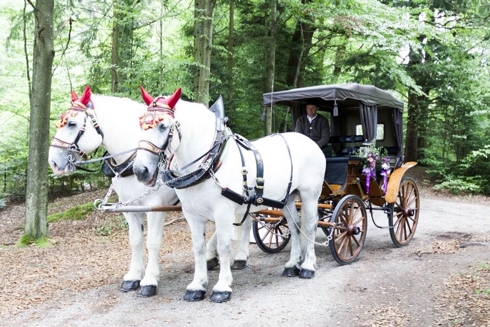 Hochzeitsreportage Hochzeitsfotos Ebnisee
